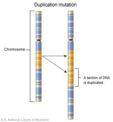 Một đoạn DNA được thêm vào ngẫu nhiên khi NST tự nhân đôi