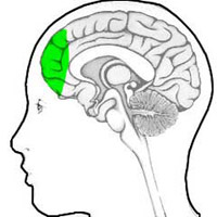 Tập tin:Brain07.jpg