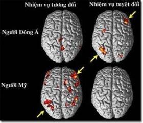 Tập tin:Culture influences brain function.jpg