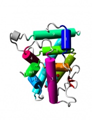 Tập tin:Nuclear receptor 5.jpg
