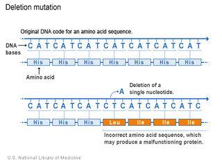 Tập tin:Dot-bien-mat-nucleotide.jpg