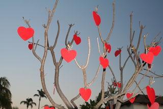 Tập tin:Valentinesdaytree.jpg