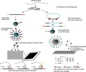 Tập tin:Sequencing process.jpg