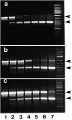 Tập tin:PCRFig1.jpg