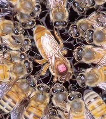 Tập tin:Bee2.jpg