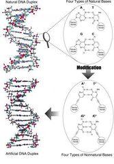 Tập tin:DNA molecule.jpg