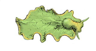 Tập tin:Elysia chlorotica.jpg