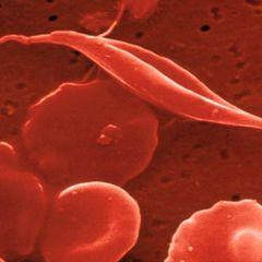 Tập tin:Stem cell.jpg