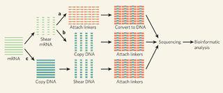 Tập tin:Cong-nghe-mRNA-Seq.jpg