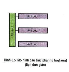 Tập tin:Hinh 8.5.jpg
