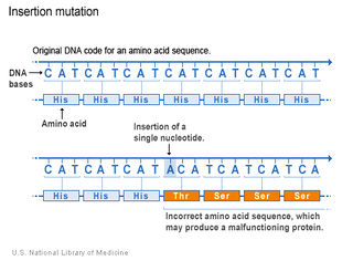 Tập tin:Dot-bien-them-nucleotide.jpg