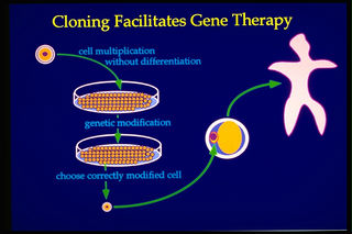 Tập tin:Cloning-for-genetic-therapy.jpg