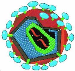 Tập tin:HIV.jpg