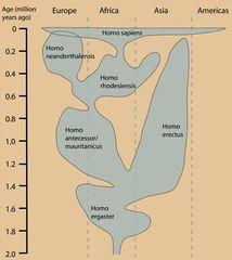 Tập tin:Human evolution.JPG