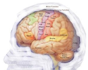 Tập tin:Neuroscience.jpg
