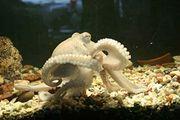 Octopus elbow.JPG
