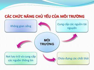 Tập tin:Moi-truong-co-nhung-chuc-nang-co-ban-nao.jpg