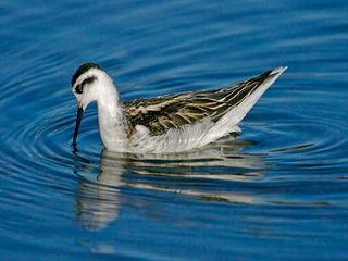 Tập tin:Bird-beak-3.jpg