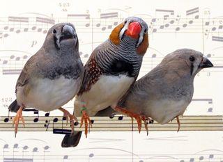 Tập tin:Birds.jpg
