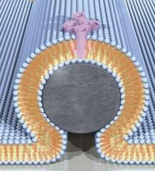 Tập tin:Nanowire.jpg