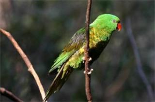 Tập tin:Parrots.jpg