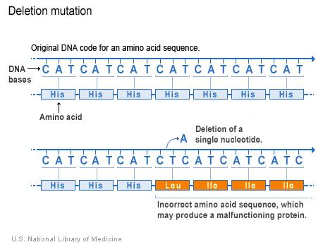 một nucleotide (adenine) bị mất đi trong mã DNA, làm thay đổi trình tự amino acid theo sau