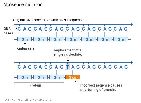 nucleotide cytosine bị thay bởi thymine trong mã DNA báo hiệu tế bào tạo một protein ngắn