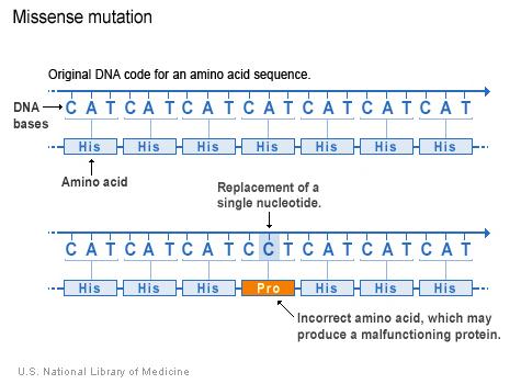 Nucleotide adenine bi thay bởi cytosine trong mã di truyền, dẫn tới một amino acid khác trong trình tự protein