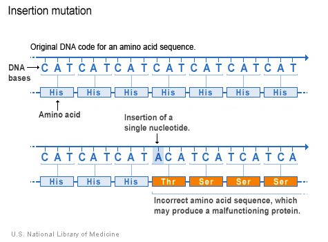 một nucleotide (adenine) được thêm vào mã DNA, làm thay đổi trình tự amino acid theo sau